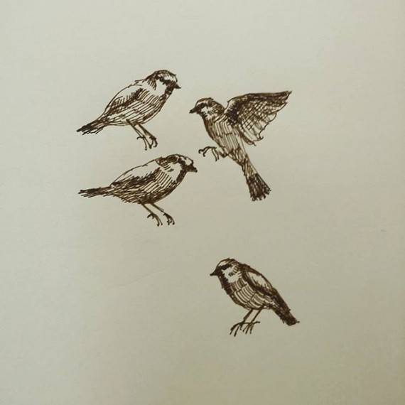 Sparrows! #birds #sketchbook #sparrow #penandink #penandinkdrawing #rohrerandklingner #rotring #aristo #sketch
