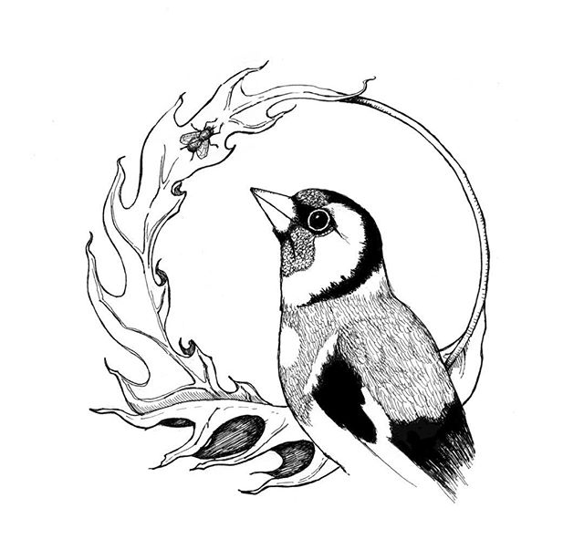 Goldfinch illustration for a Psychotherapist's practice #ornithology #birds #goldfinch #thistle #fly #illustration #penandink #rotring #carboninkpen #fountainpen #fineliner